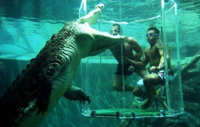 Nagez avec un crocodile d 39 eau de mer - Peut on se baigner pendant la filtration de la piscine ...