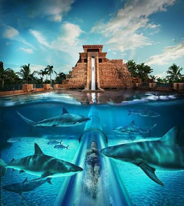 piscine de service de rencontres de poissons CS aller matchmaking 128 Tick