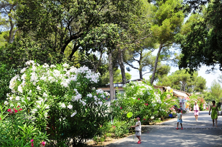 Camping - Agay - Provence-Alpes-Côte d'Azur - Le Dramont